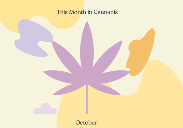 tmic october nz cannabis referendum feature