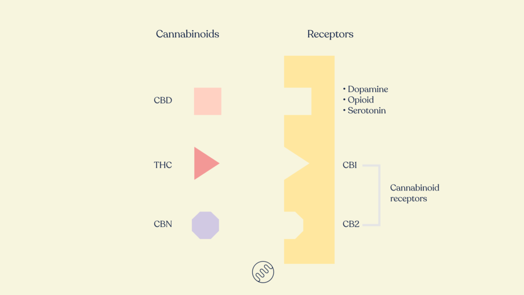 cannabinoids and receptors like lock and key honahlee